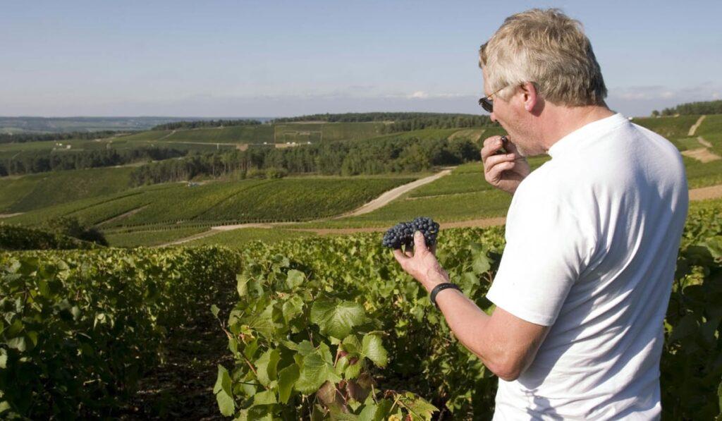 Pascal grape testion